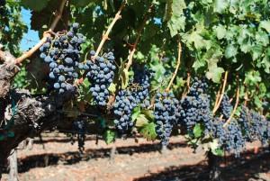 рентабельность предприятия винодельческого бизнеса